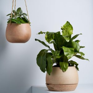 Self Watering Planter Garden to Table 3
